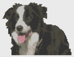 Macintosh HD:Users:Fiona:Documents:florashell:border collie:Border Collie.chart