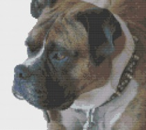 Macintosh HD:Users:Fiona:Documents:Bits and bobs:embroidery:photo ideas:dogs:Boxer.chart