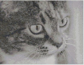 Macintosh HD:Users:Fiona:Documents:florashell:cat face:Cat Face.chart