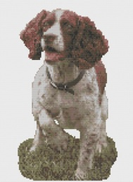 Macintosh HD:Users:Fiona:Documents:florashell:english springer spaniel:English Springer Spaniel.chart