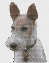 Macintosh HD:Users:Fiona:Documents:florashell:fox terrier:Fox Terrier.chart