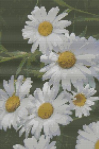 Macintosh HD:Users:Fiona:Documents:Bits and bobs:embroidery:White Daisies.chart