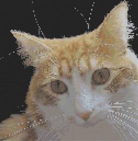 Macintosh HD:Users:Fiona:Documents:florashell:marmalade cat:Marmalade Cat.chart