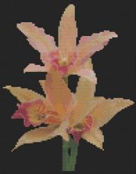 Macintosh HD:Users:Fiona:Documents:florashell:orange orchid spray:Orange Orchid Spray.chart