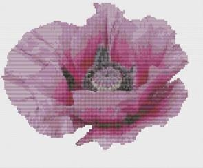 Macintosh HD:Users:Fiona:Documents:florashell:Patty's Plum Poppy:Patty's PlumPoppy.chart