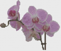 Macintosh HD:Users:Fiona:Documents:florashell:pink orchid spray:Pink Orchid Spray.chart