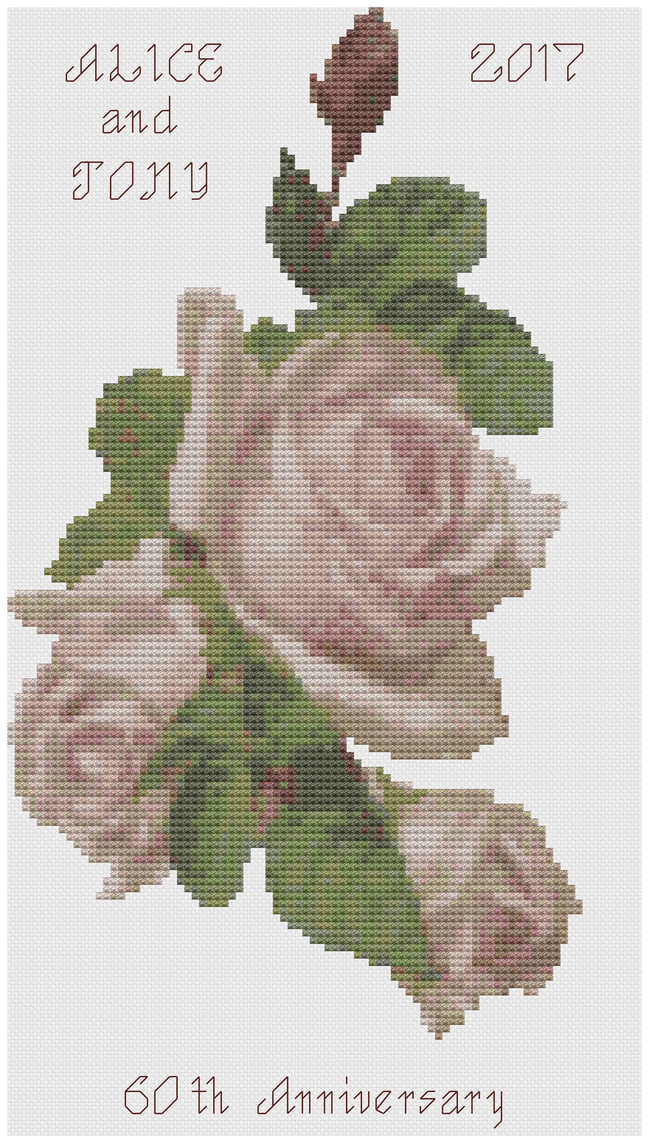 Pink Rose Anniversary