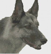 Macintosh HD:Users:Fiona:Documents:florashell:german shepherd 2:german shepherd.chart