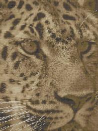 Macintosh HD:Users:Fiona:Documents:florashell:Jaguar Face:jaguar face.chart