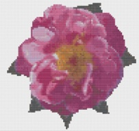 Macintosh HD:Users:Fiona:Documents:Bits and bobs:embroidery:open pink rose.chart