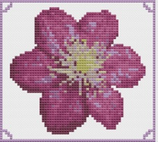 Macintosh HD:Users:Fiona:Documents:florashell:purple clematis:purple clematis.chart