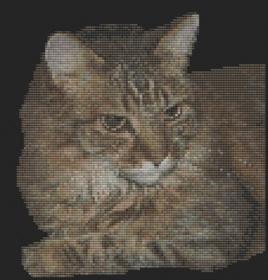 Macintosh HD:Users:Fiona:Documents:florashell:tabby cat:Applications.chart